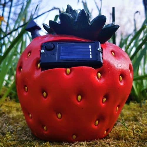 solar strawberry