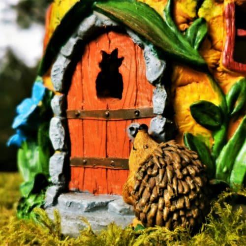 hedgehog by the front door
